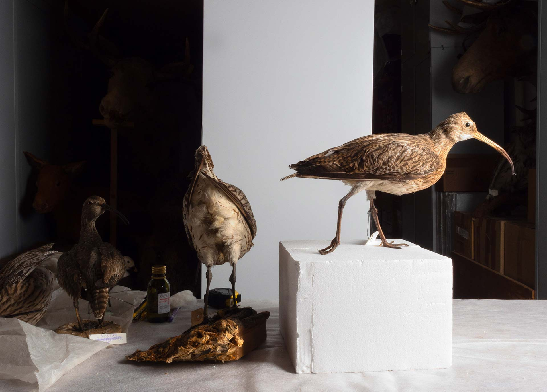 Axel Straschnoy: The Dioramas from the Permian Museum